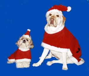 Lookit!  Lookit!  DOGS in SANTA SUITS!!!